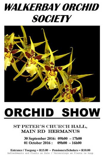 orchid_show_hermanus