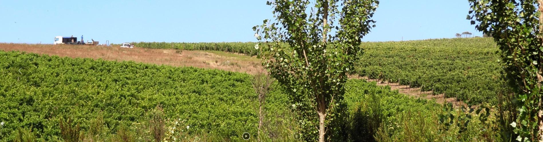 Seven Springs Vineyard Wines Hemel & Aarde Road Wines