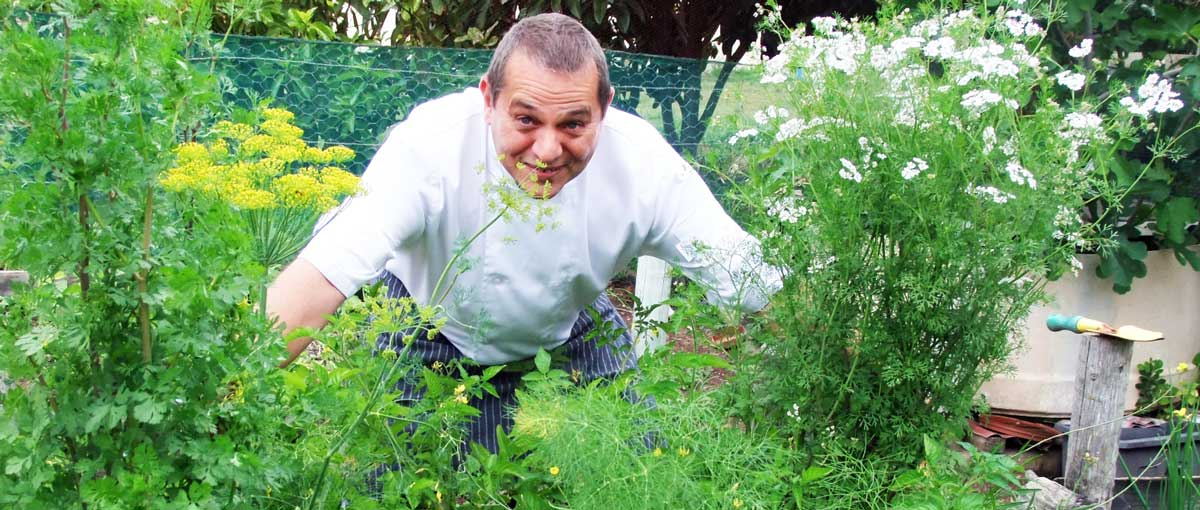 Chef Dino in the organic Panorama garden, giving the herbs some love, while getting more inspired.